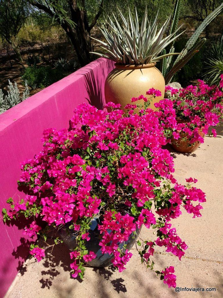 desert_botanical_garden_phoenix-3