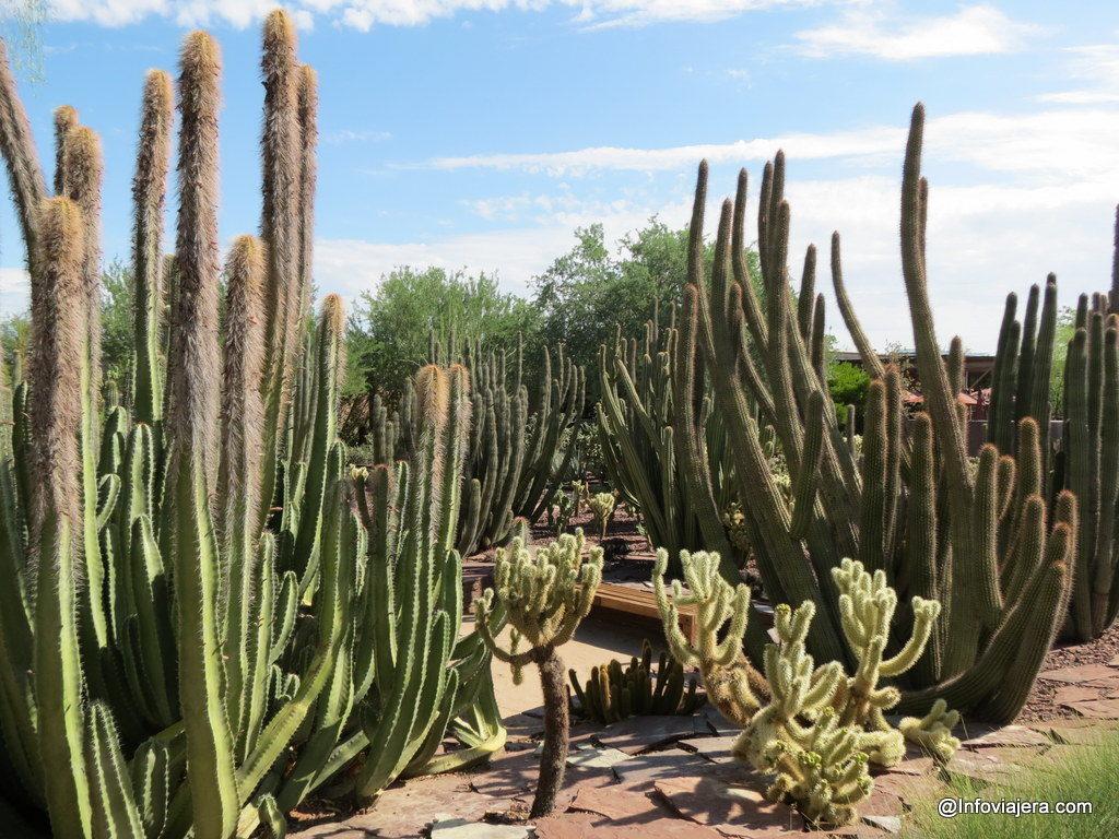 desert_botanical_garden_phoenix-6